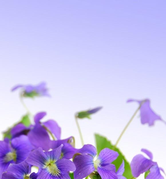 elegante, flores moradas material de imagen   Descargar Fotos gratis