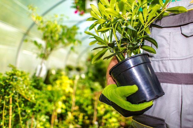 Elegir flores del jardín derecho Foto gratis