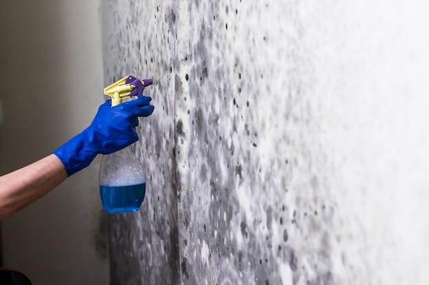 Eliminar el moho en la pared de la habitación Foto Premium
