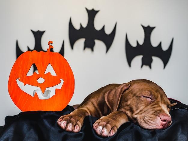 Encantador cachorro acostado sobre una alfombra negra Foto Premium