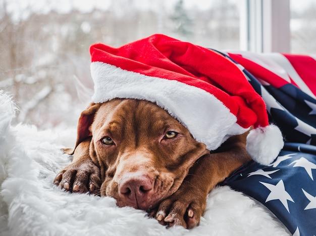 Encantador cachorro y decoraciones. de cerca Foto Premium