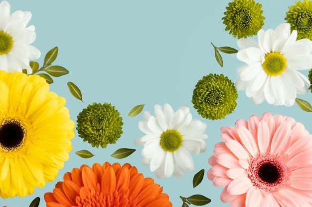 Endecha plana de gerberas y margaritas de primavera. Foto gratis