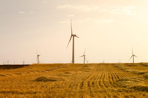 Energía eólica. campo de trigo y cielo azul Foto Premium