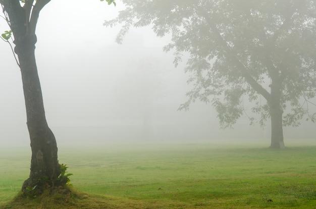 Escena de invierno de árboles sin hojas en la niebla | Descargar ...
