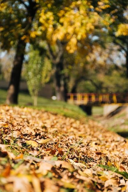 Escena hermosa del otoño con el fondo borroso del parque Foto gratis