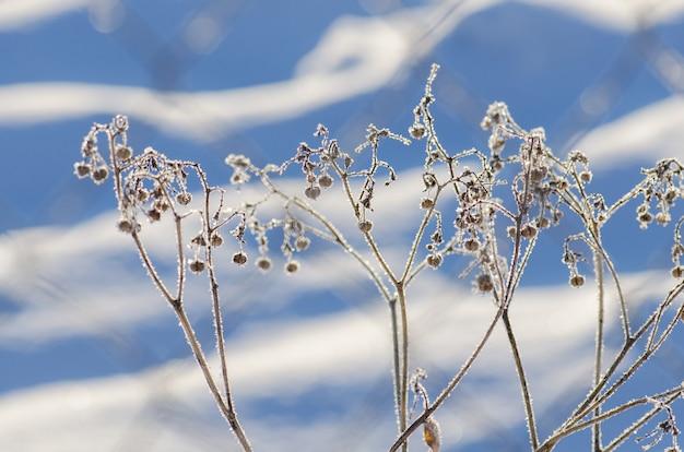 Escena de hielo natural de invierno. frozenned planta helada Foto Premium