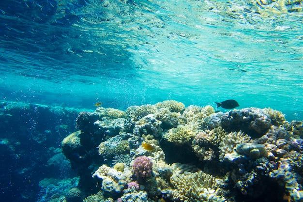 Escena tranquila bajo el agua Foto Premium