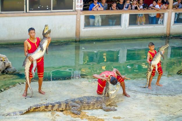 Espectáculo de cocodrilo Foto Premium