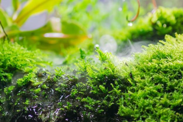 Estanque tropical rodeado de plantas verdes y musgo Foto Premium