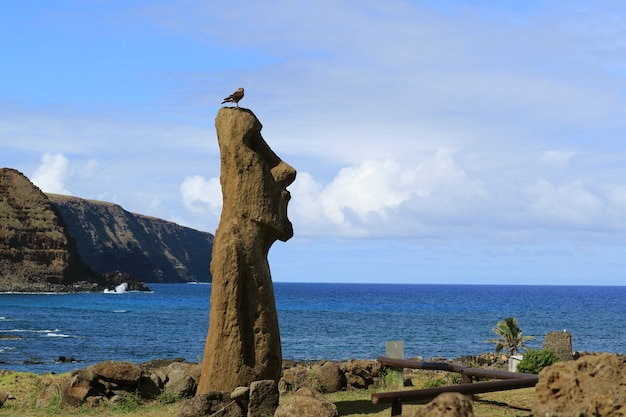 Estatua de moai en ahu tongariki con el pájaro cóndor en la cabeza, isla de pascua, chile Foto Premium