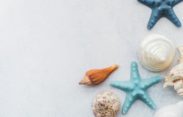 Estrella de mar y conchas en superficie blanca Foto gratis
