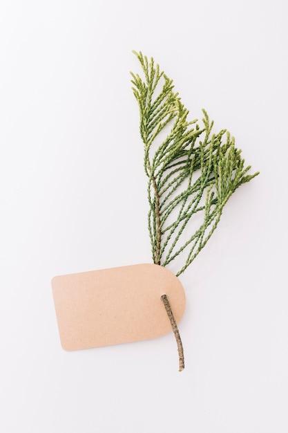 Etiqueta marrón en blanco con la ramita de cedro sobre fondo blanco Foto gratis