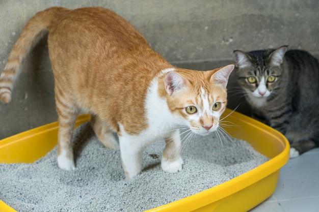 La excreción de los gatos es de rutina diaria. Foto Premium