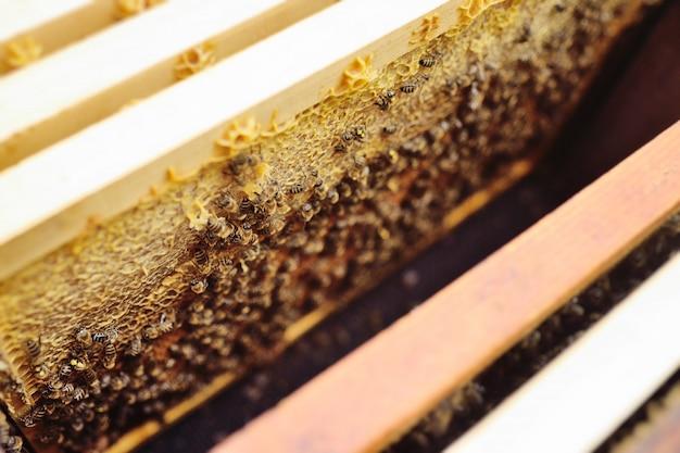 Una familia de abejas de cerca en un marco de apiario Foto Premium