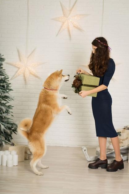 ¡feliz navidad y próspero año nuevo! la niña da un regalo de navidad en caja a su perro de raza akita inu Foto Premium