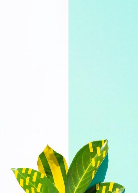 Ficus deja con fondo de espacio de copia contrastada Foto gratis