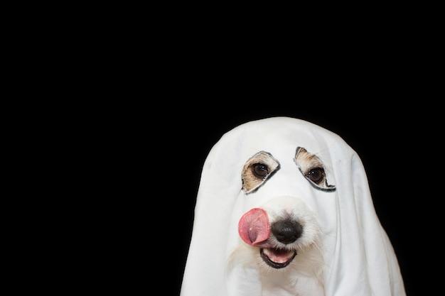 Fiesta de traje del fantasma de halloween del perro. antecedentes de fondo negro. Foto Premium