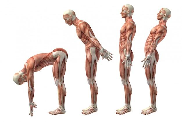 Figura médica 3d que muestra la flexión, extensión e herextensión del tronco. Foto gratis