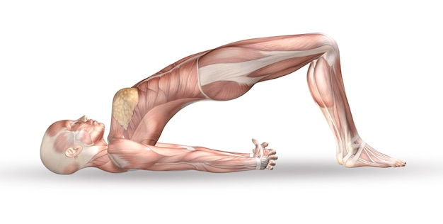 Figura médica femenina 3d con mapa muscular en posición de yoga Foto gratis