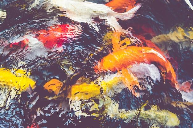 Filtro vintage peces koi en estanque fondo natural for Filtro estanque koi