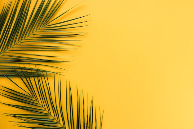 Flat lay de hojas tropicales con copyspace Foto gratis