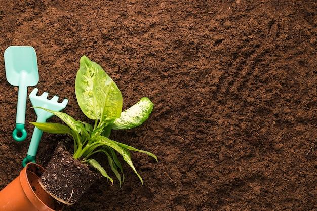 Flat lay de planta y herramientas de jardinería con copyspace Foto gratis