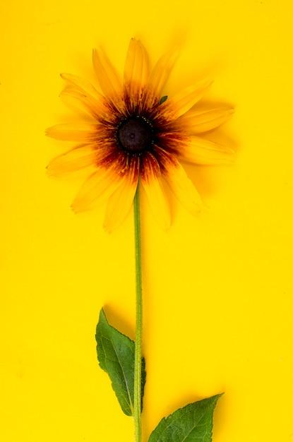 Flor amarilla sobre papel brillante. foto Foto Premium