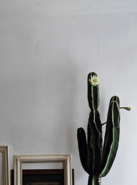 Flor de cactus de interior Foto gratis