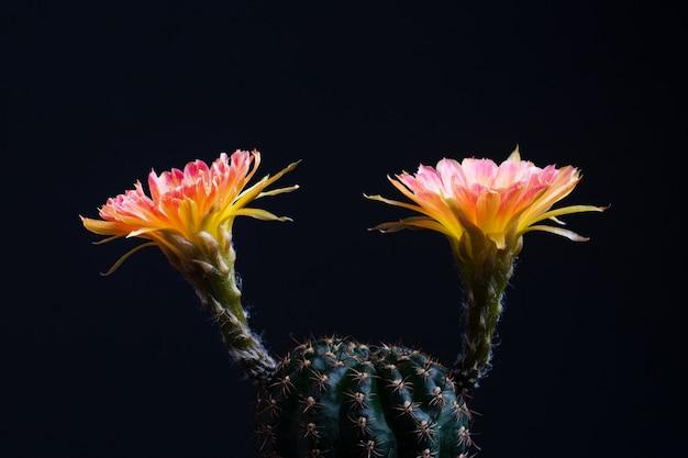 Cenicero cactus naranja