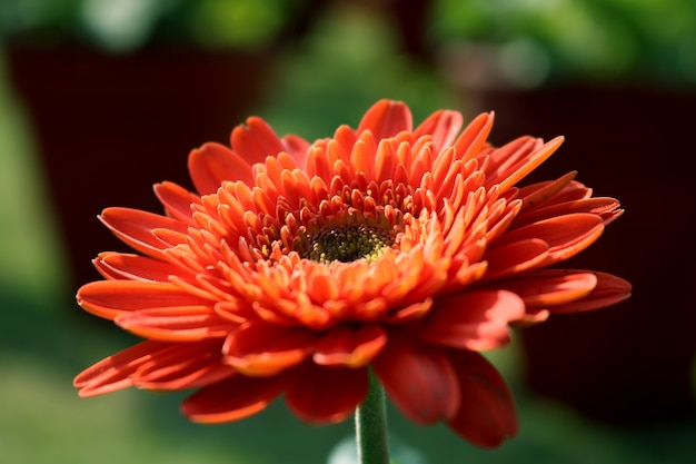 foto de flor gratis: