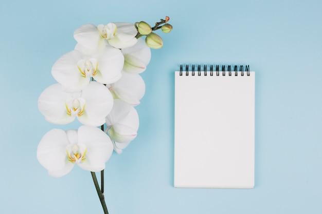 Flor fresca de la orquídea cerca de la libreta espiral contra fondo azul Foto gratis
