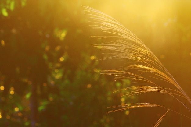 POEMAS SIDERALES ( Sol, Luna, Estrellas, Tierra, Naturaleza, Galaxias...) - Página 24 Flor-hierba-ramas-salida-sol-luz-natural-manana_36615-178