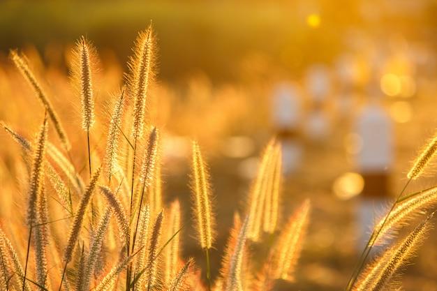 Flor de la hierba Foto Premium