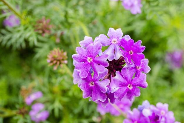 Flor morada en el jardin | Descargar Fotos premium