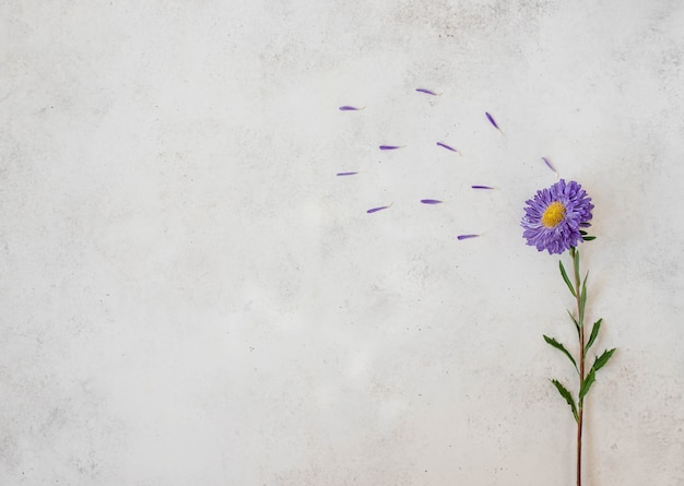 Flor morada sola fresca Foto Premium