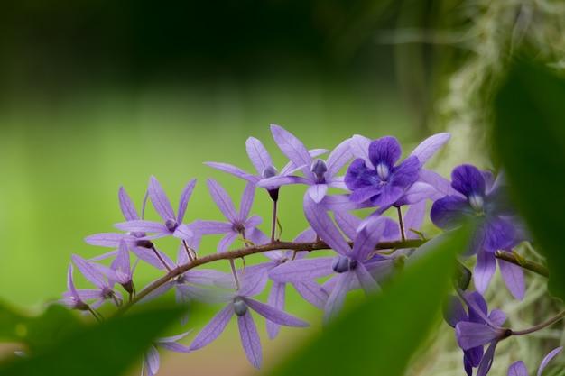 Flor de orquidea morada Foto Premium