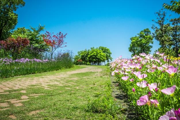 Flor en el parque Foto gratis