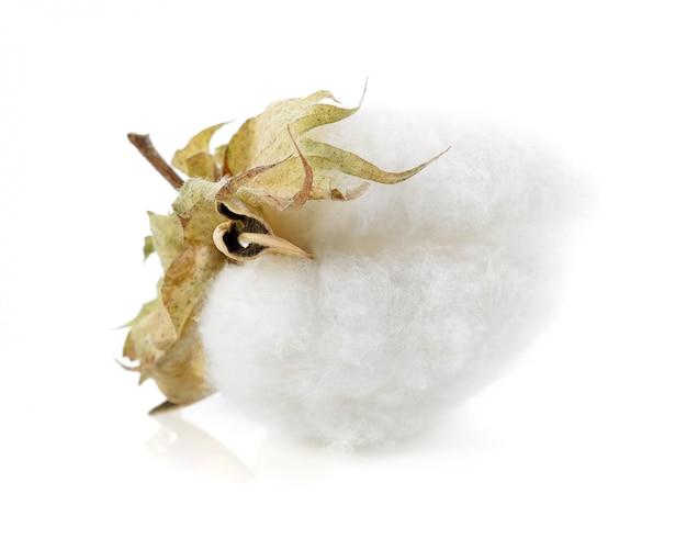 Flor de la planta de algodón aislada sobre fondo blanco Foto Premium