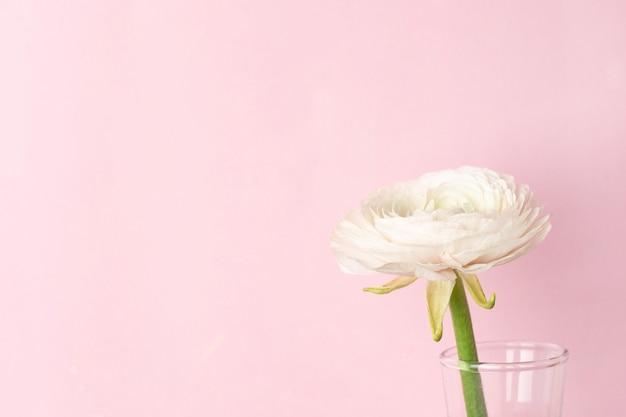 Flor de ranúnculo blanco patrón en rosa pastel Foto Premium