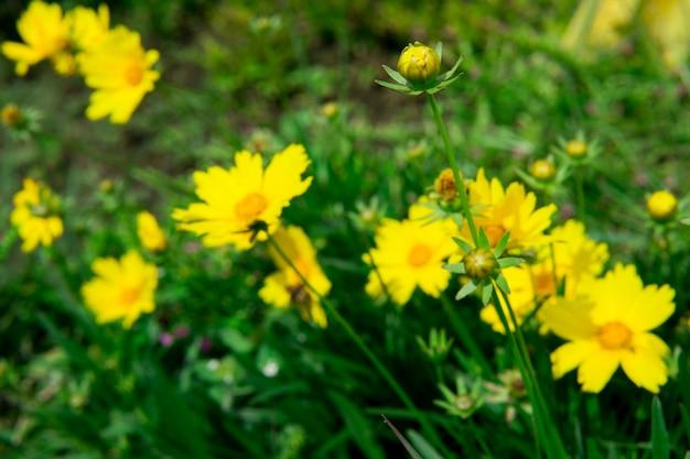 Flor Silvestre De Primavera Amarilla En El Jardin Descargar Fotos