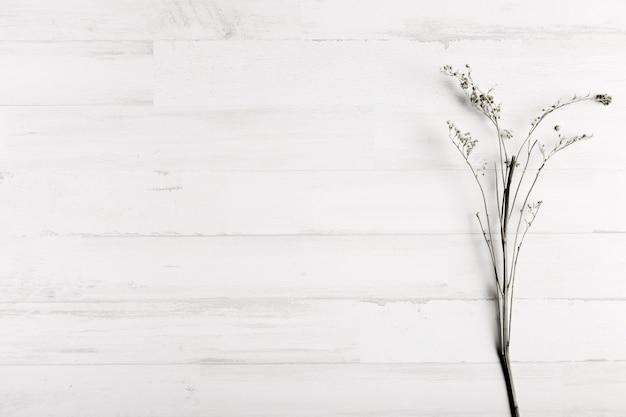 Flor sobre fondo de pared de madera blanca Foto gratis