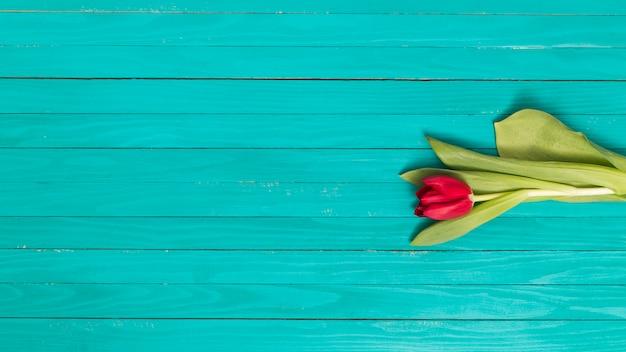 Flor de tulipán rojo solo con hojas verdes sobre fondo de textura de madera Foto gratis