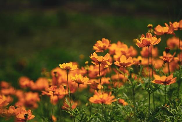 Flores alrededor Foto Premium