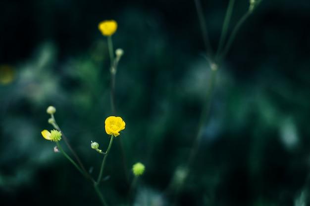 Flores Amarillas En Un Fondo Negro Descargar Fotos Premium