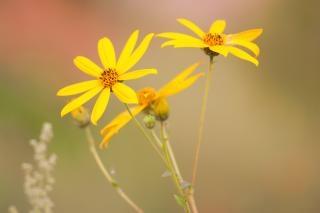 Flores Amarillas Silvestres Descargar Fotos Gratis