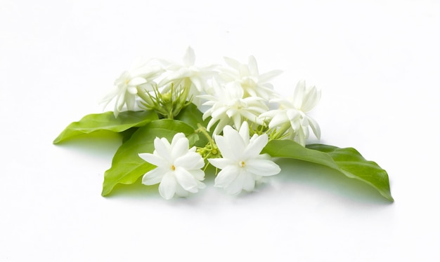 Hermosas Flores Blancas Wallpaper Hd Fondos De Pantalla Gratis: Fondo De Flores Blancas