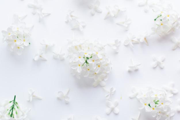 Flores blancas e inflorescencias de cereza de pájaro sobre un fondo blanco. Foto Premium