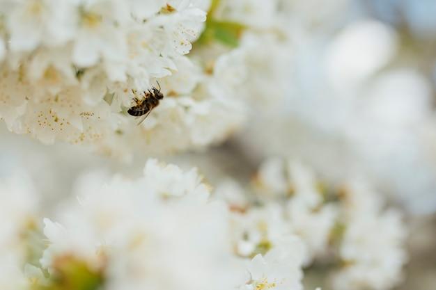Flores blancas en una rama Foto gratis