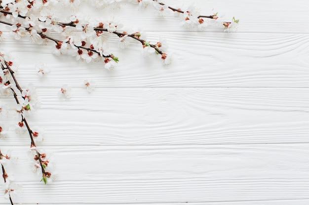 Flores Blancas Sobre Fondo Blanco Descargar Fotos Premium
