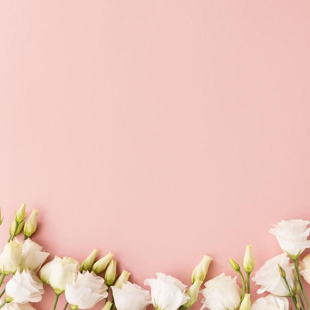 Flores blancas sobre fondo rosa Foto Premium